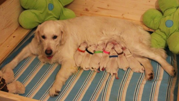 Rosalie with her babies just after delivery
