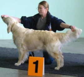 Delibes´s Golden Marian - Excellent 1.place, CAC, r.CACIB