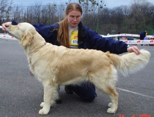 Delibes´s Golden Marian - Excellent 1.place, CAC, CACIB